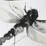 dragonfly01@AnjaKleemann-Jacks